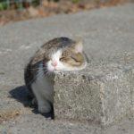 竹崎由佳アナウンサーは猫好き!借金の真相は?ブログやインスタで画像を紹介